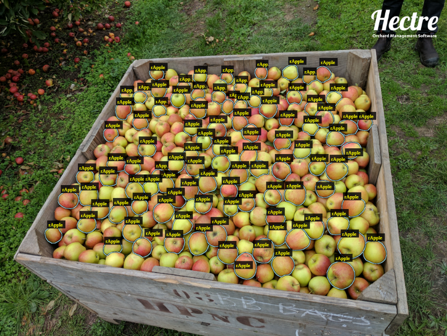 A bin full of apples that are manually labelled
