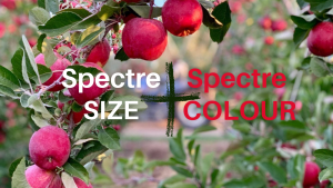 Spectre size and colour combo
